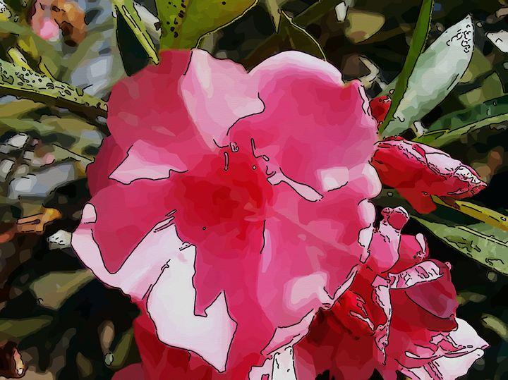 Oleander or common oleander - CLA