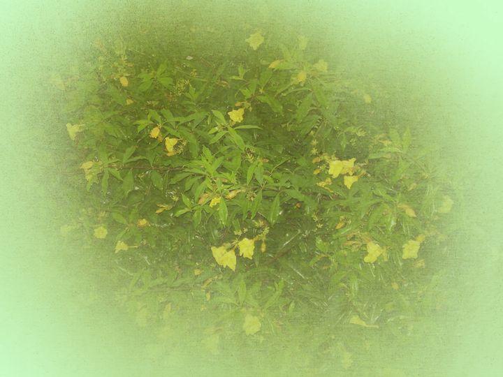Floral theme - CLA