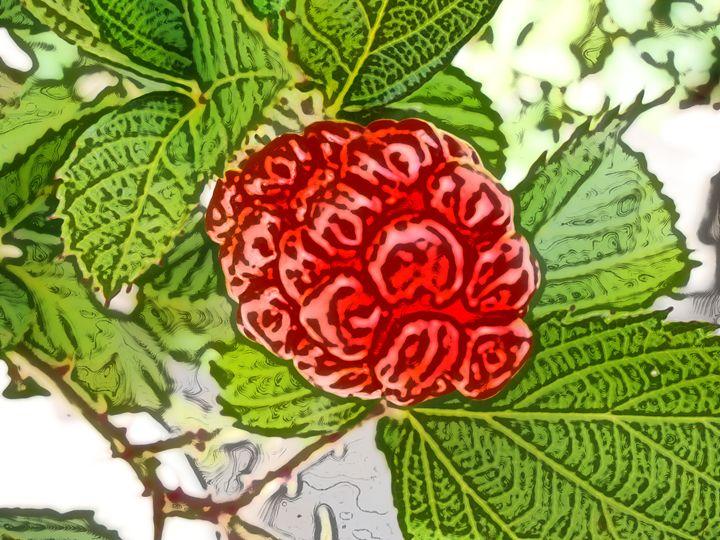 Blackberry - Fruit - Red - CLA