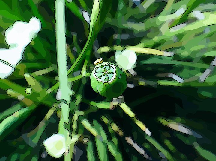 Yellow flowering wild iris - CLA