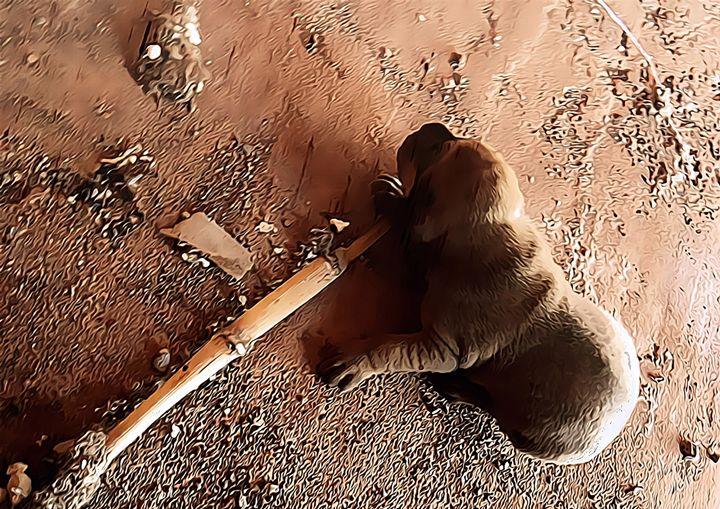 Puppy - CLA