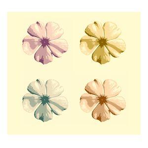 Vinca, cape periwinkle or jasmine - CLA