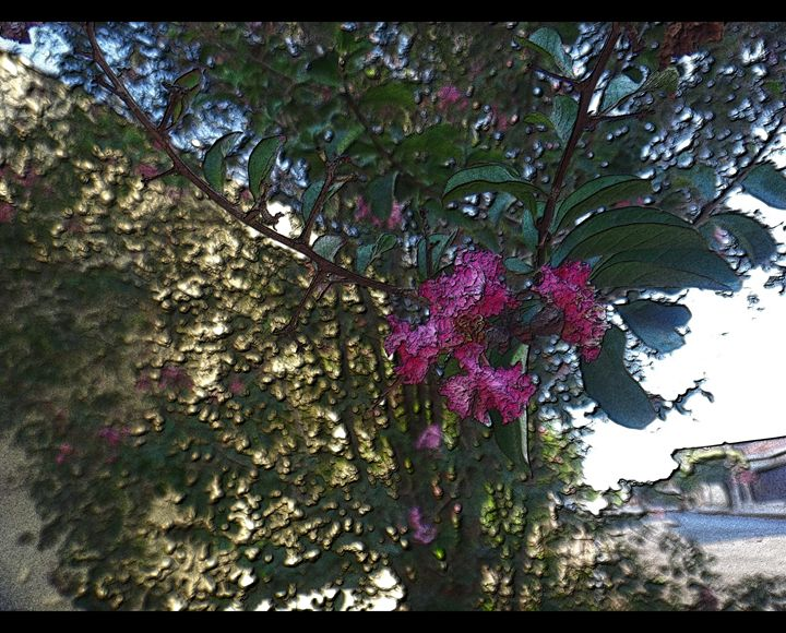Crapemyrtle - Pink flowers - CLA