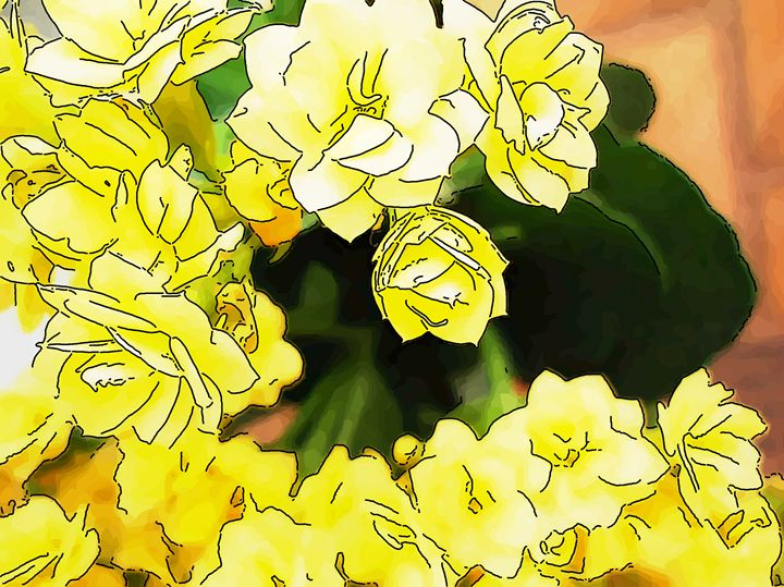 Yellow flower of kalanchoe - CLA