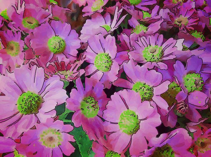 Cineraria or daisy - CLA