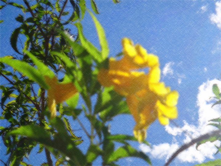 Yellowbell or trumpetflower - CLA