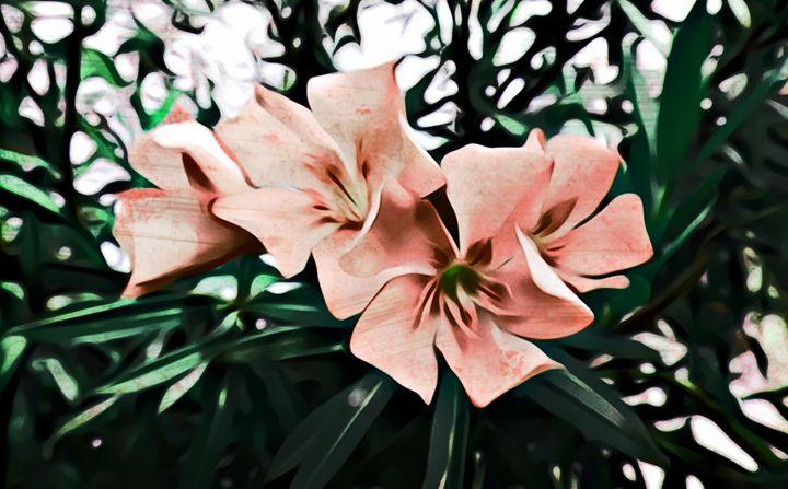 Oleander - Orange - CLA