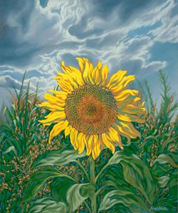 Sunflower 1 - Dewey Franklin
