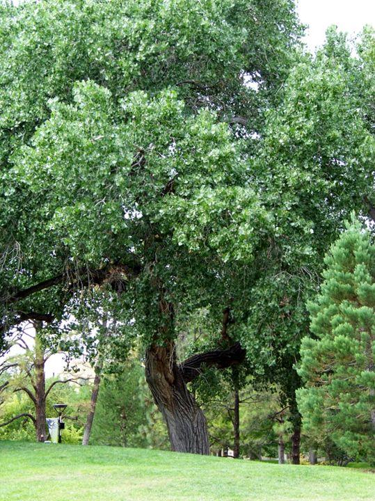 Majestic Tree - ShutterBug