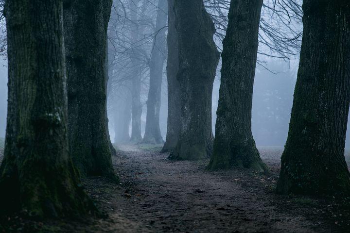 Trees on a foggy day - B2G FOCUS