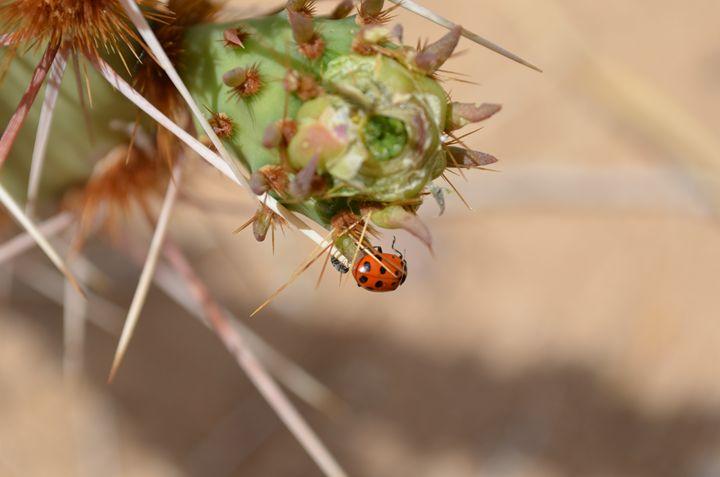 A Bug's Life - Kandi