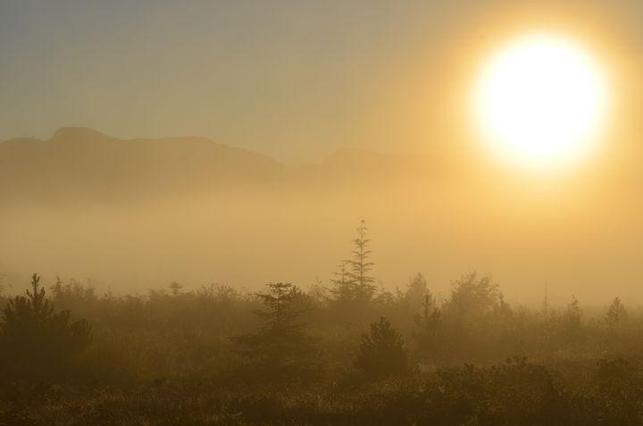 Morning Warmth - Kandi