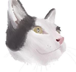 Schmidt the cat