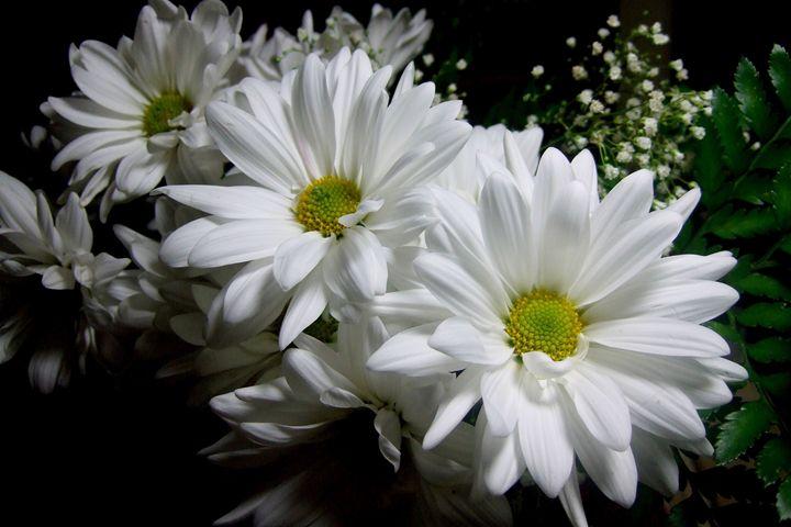 White Dahlias - My Decadia