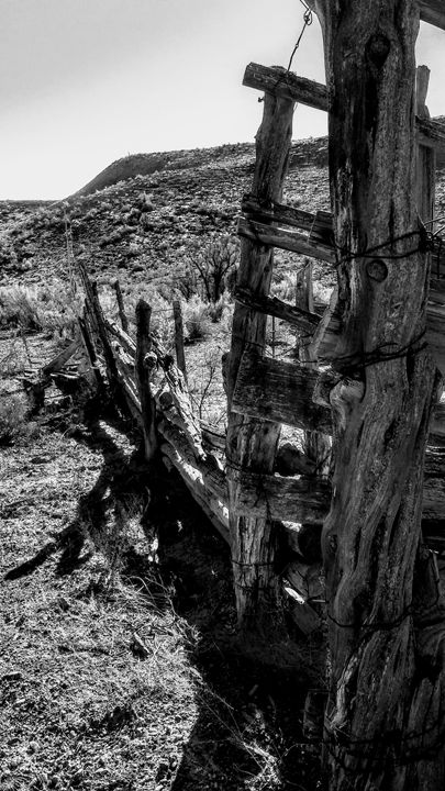 Old Fence - The Twisted Elephant