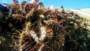 Cactus From the Road