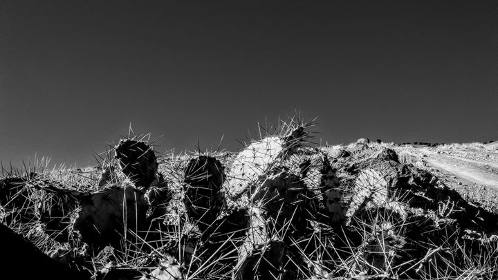 Cactus in winter - The Twisted Elephant