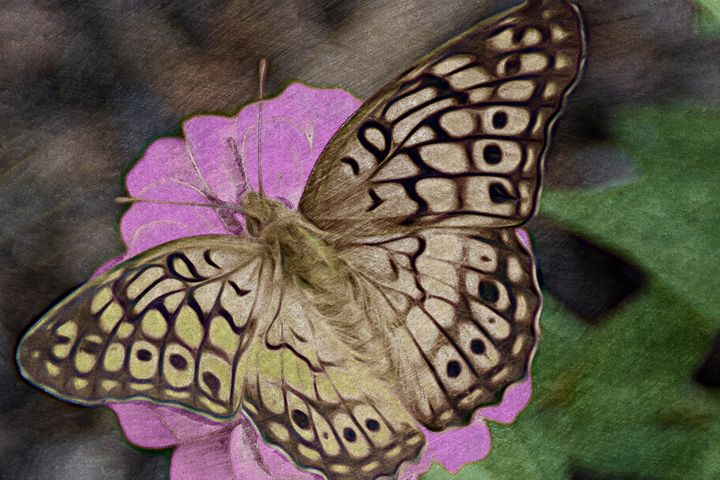 Butterfly Love - Chandra Lynn PhotoArt