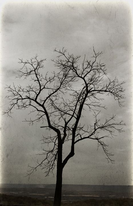 Winter Tree - Chandra Lynn PhotoArt