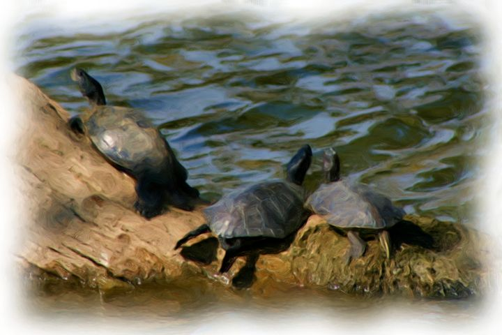 The Turtles Are Free - Chandra Lynn PhotoArt
