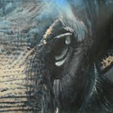 One of my Elephant Collection. Inspi