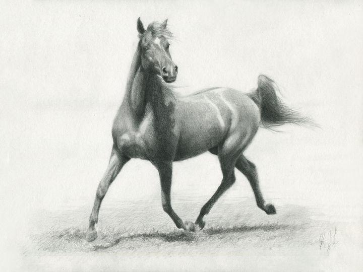 Arabian - KJL90