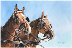 Pair of Clydesdales - Byron Chaney's Illustration and Design