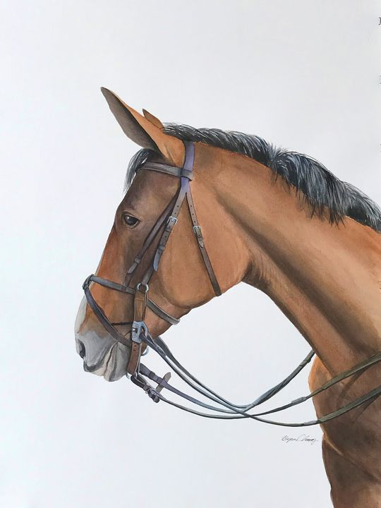 Horse Portrait - Byron Chaney's Illustration and Design