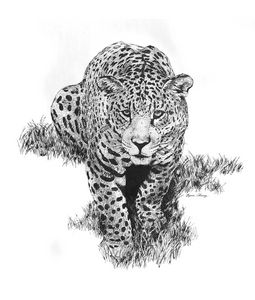 The Eyeing Jaguar - Byron Chaney's Illustration and Design