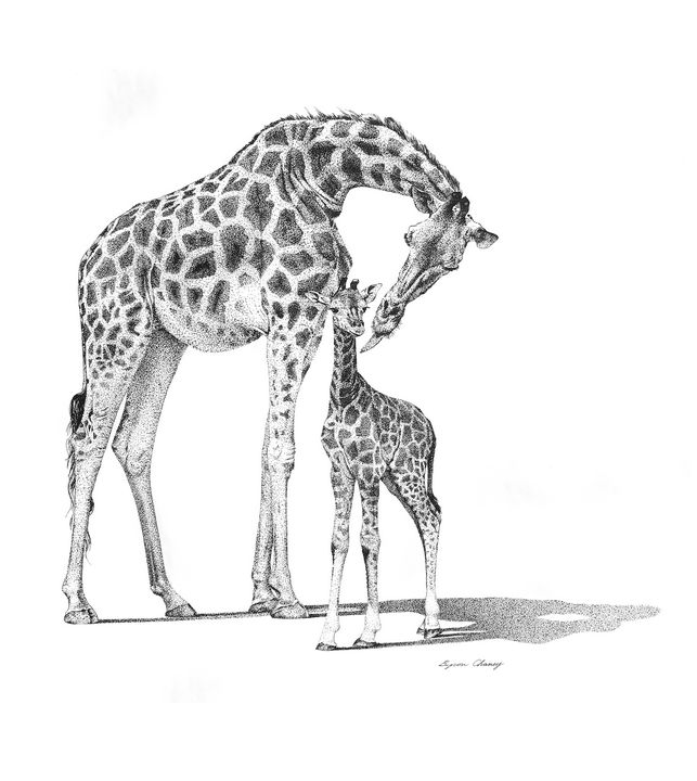 Mom & Calf Giraffes - Byron Chaney's Illustration and Design