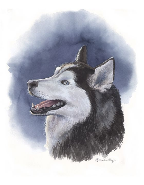 Siberian Husky Portrait - Byron Chaney's Illustration and Design