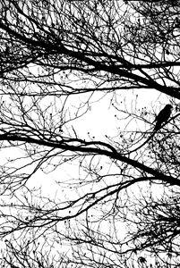 Black & white bird