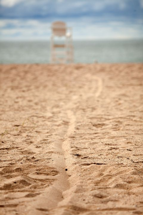 Lines In The Sand - Karol Livote Photography