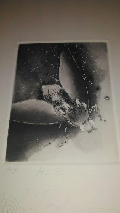 Cosmic Fly/Frank Boyden - Doug Mekemson