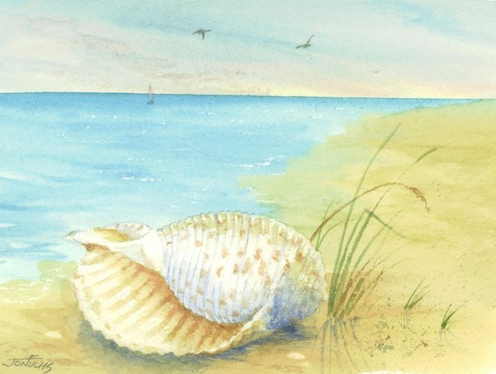 Tonna Shell - Jon Fuchs Art