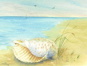 Tonna Shell