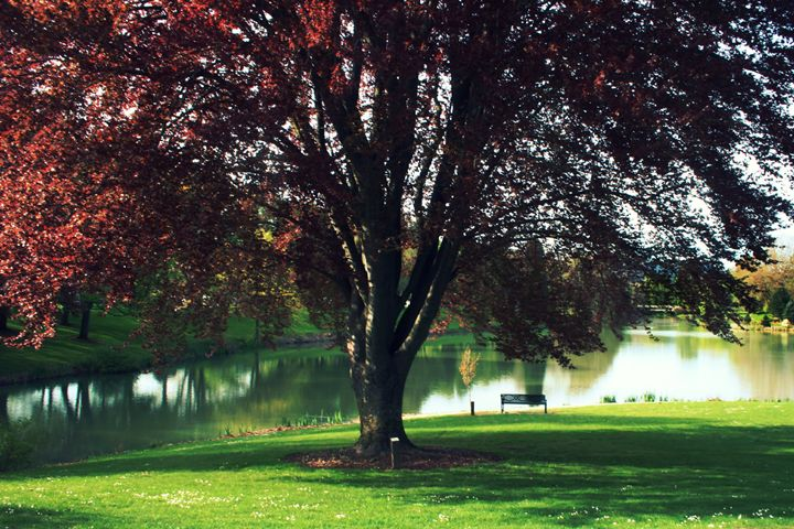 Red Tree - Crazyville & Fantasyland