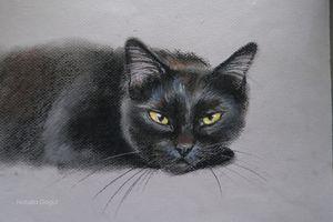 Black cat portrait in Pastel
