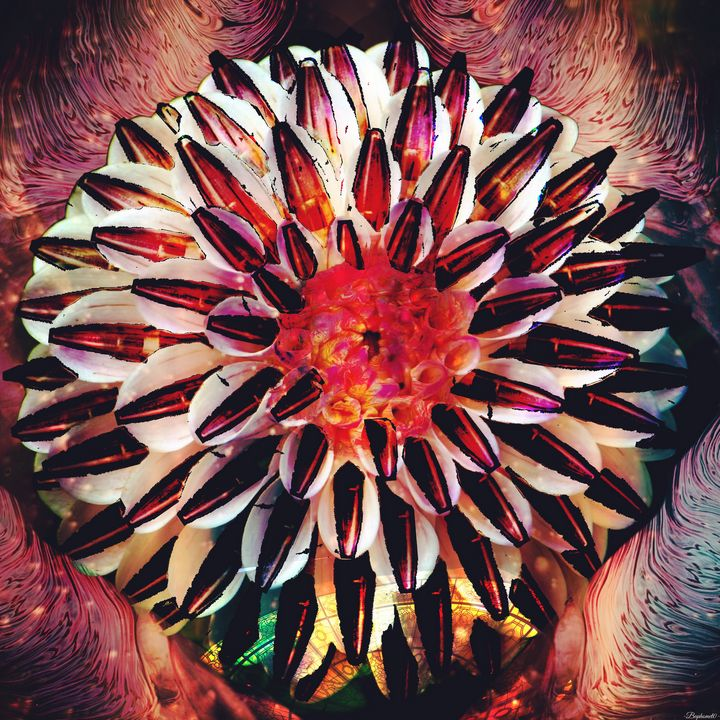 Cosmic bloom - Baphomet0