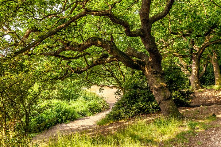 Summer Woodland - FineArtNorfolk