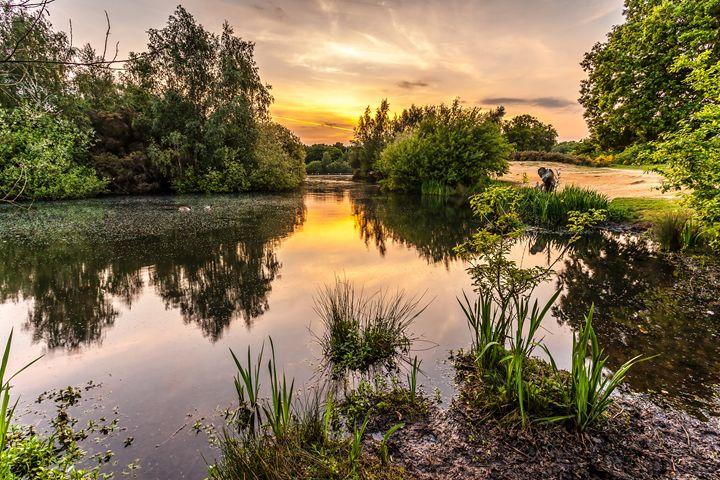Hollow Ponds Sunset - FineArtNorfolk