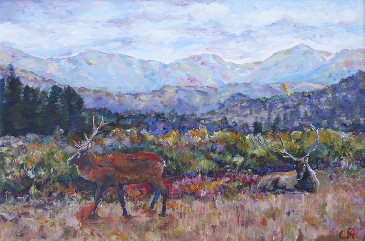 Estes Park Colorado Elk - Chris Rutledge