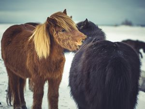 Horse friends forever