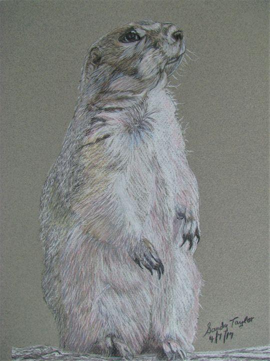 Groundhog - Art by Sandy Taylor