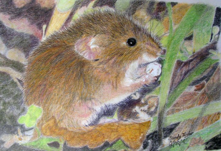 Harvest Mouse - Art by Sandy Taylor