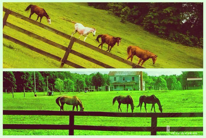 Maryland Horses - Refuged