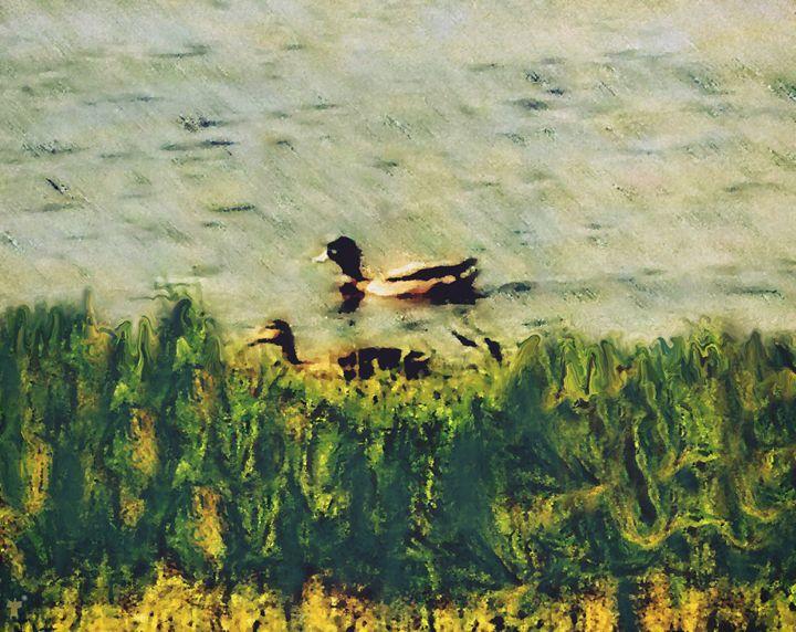 Washington D.C. - Anacostia River II - Refuged