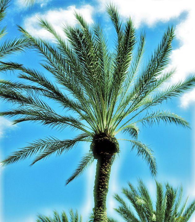Date palm tree - Strange World
