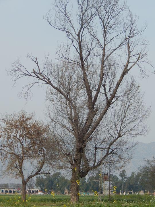 Autumn Tree - Foto_Generic