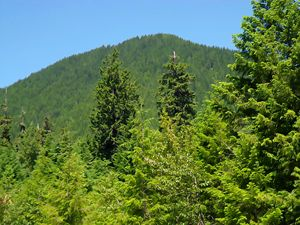 Mt Rainier Forests